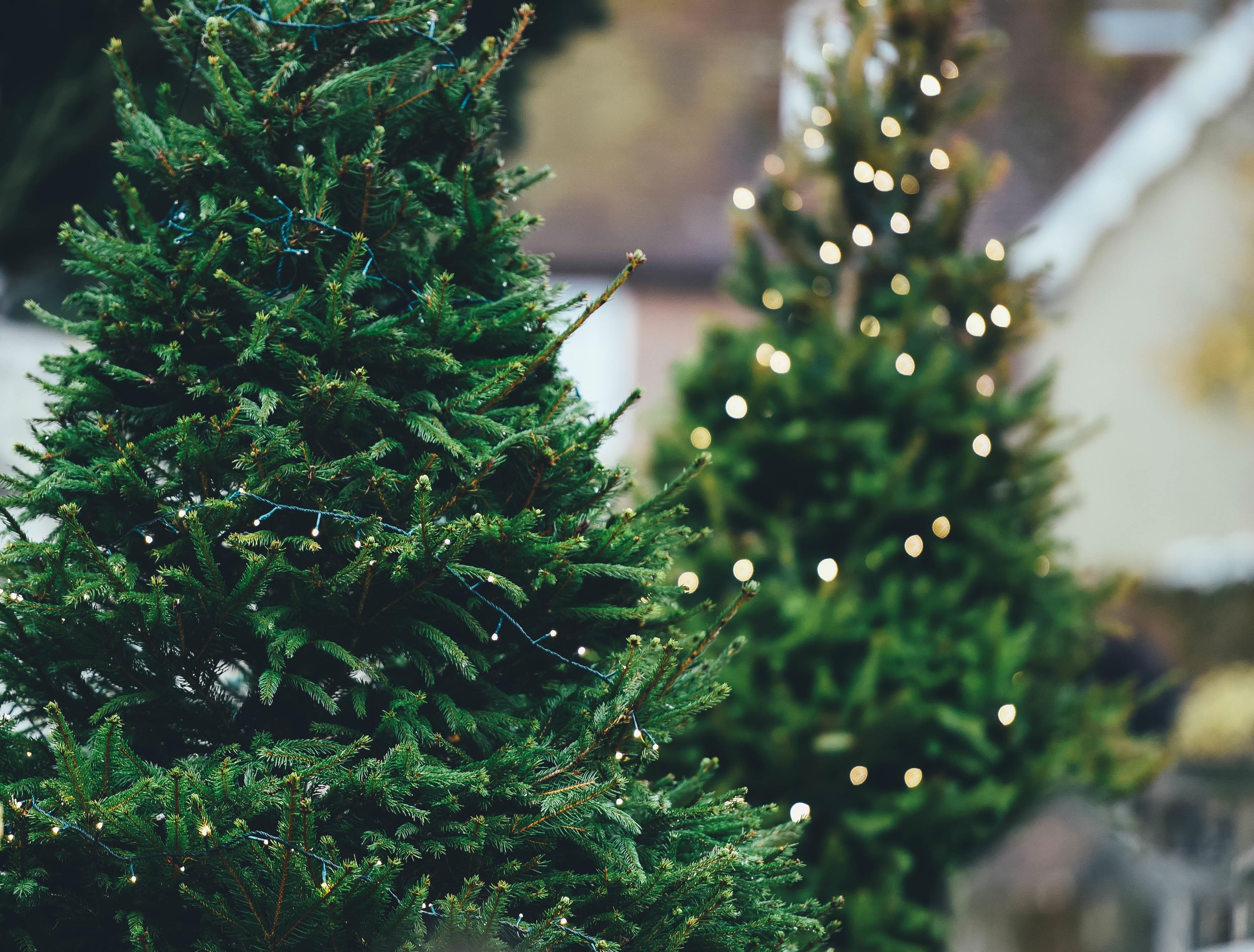 Elegir qué árbol presidirá tu casa en Navidad es difícil, pero te damos algunos consejos que harán que la elección sea más fácil.