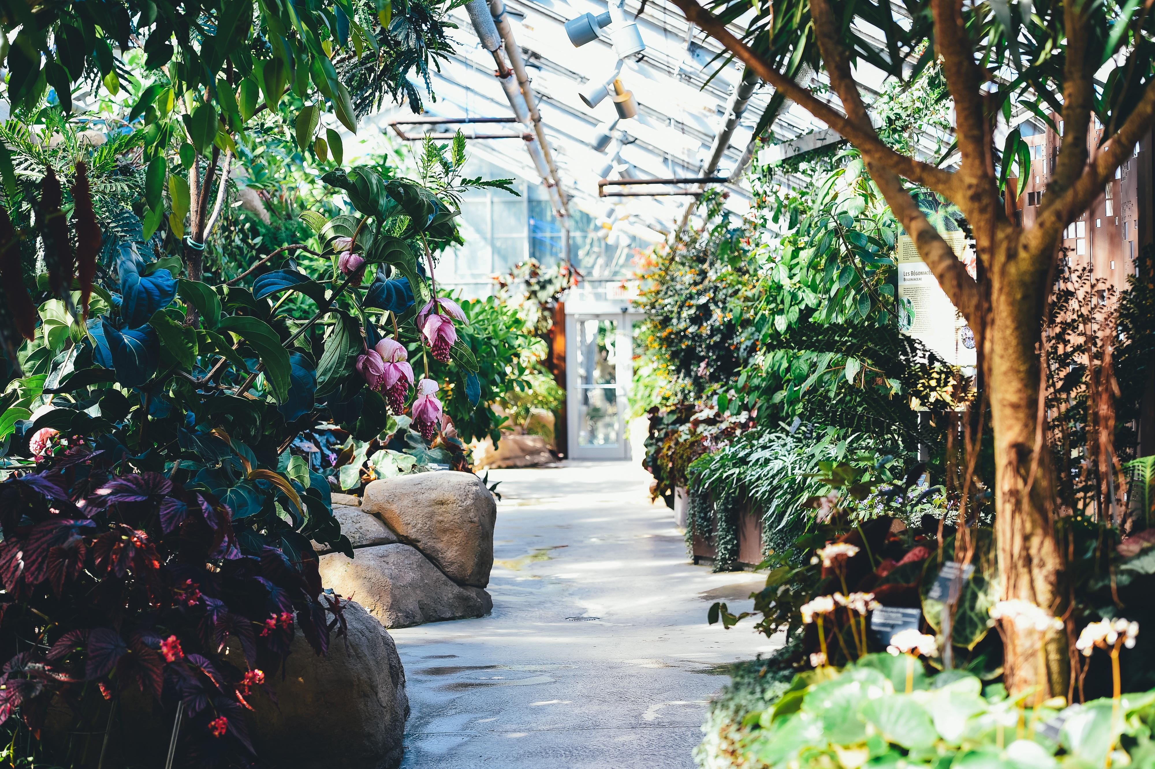 Jardín donde podemos replantar nuestro arbol