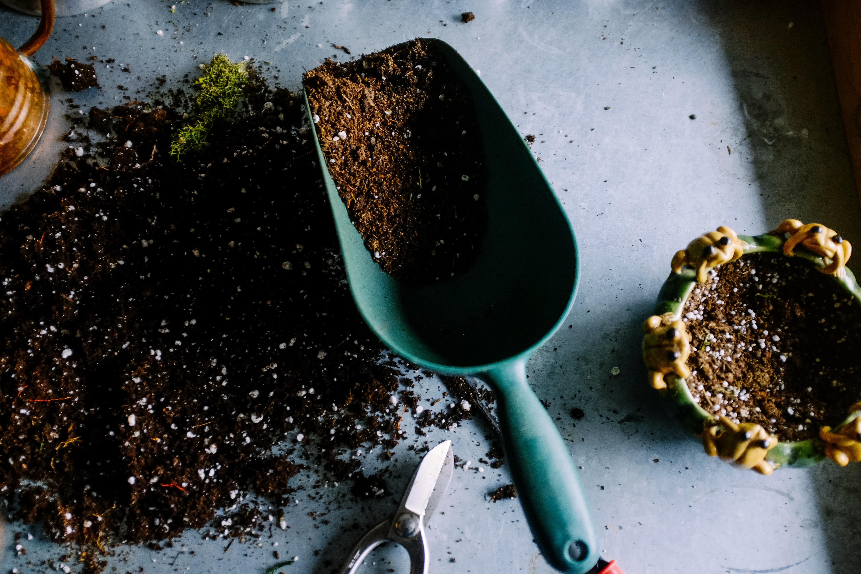 Trasplantar el árbol a la maceta de tu piso para reciclar tu árbol de navidad y así decorar tu terraza