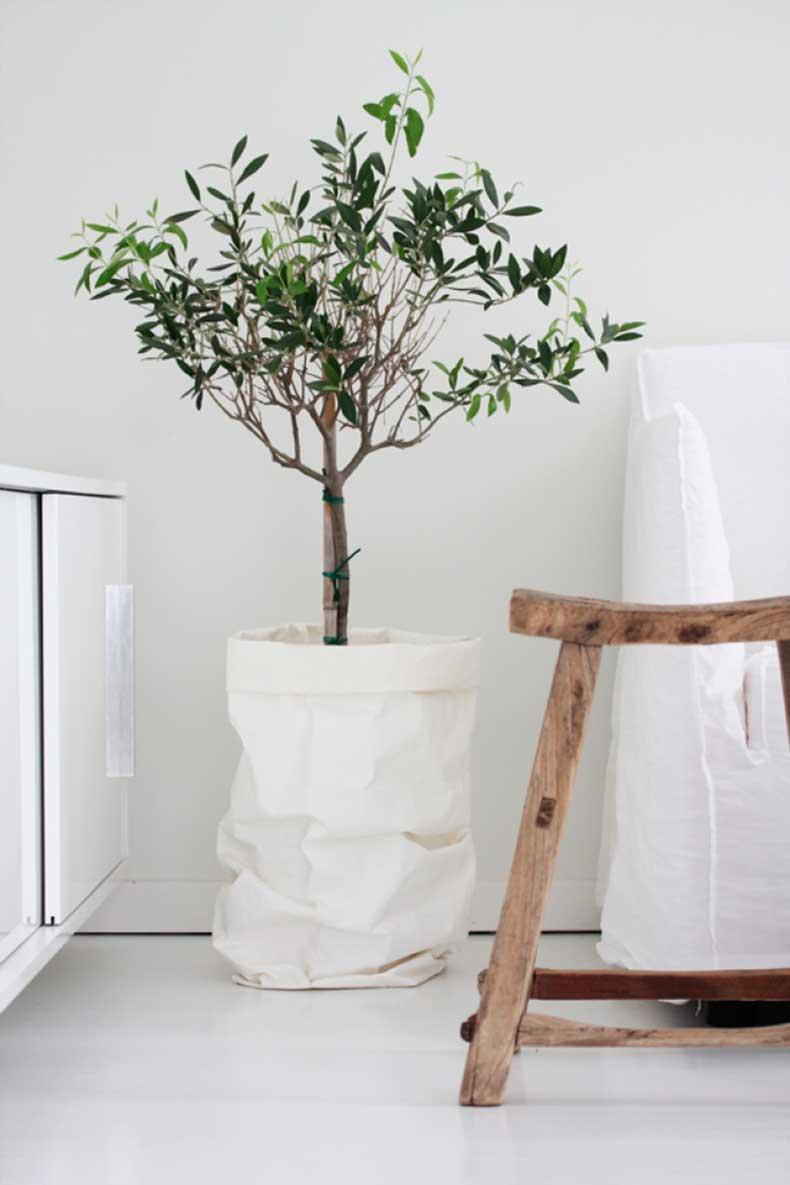 olivo para decorar el interior de tu hogar