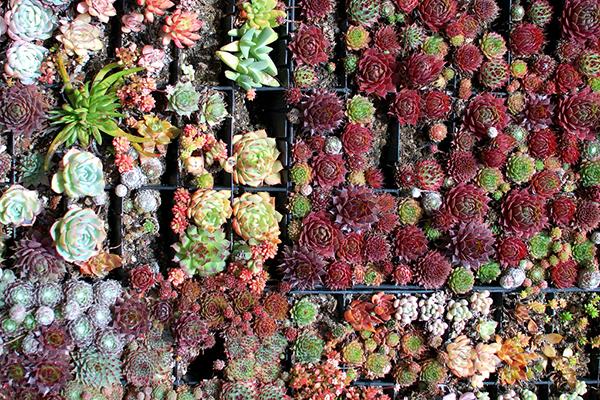 Flores de colores para jardín vertical