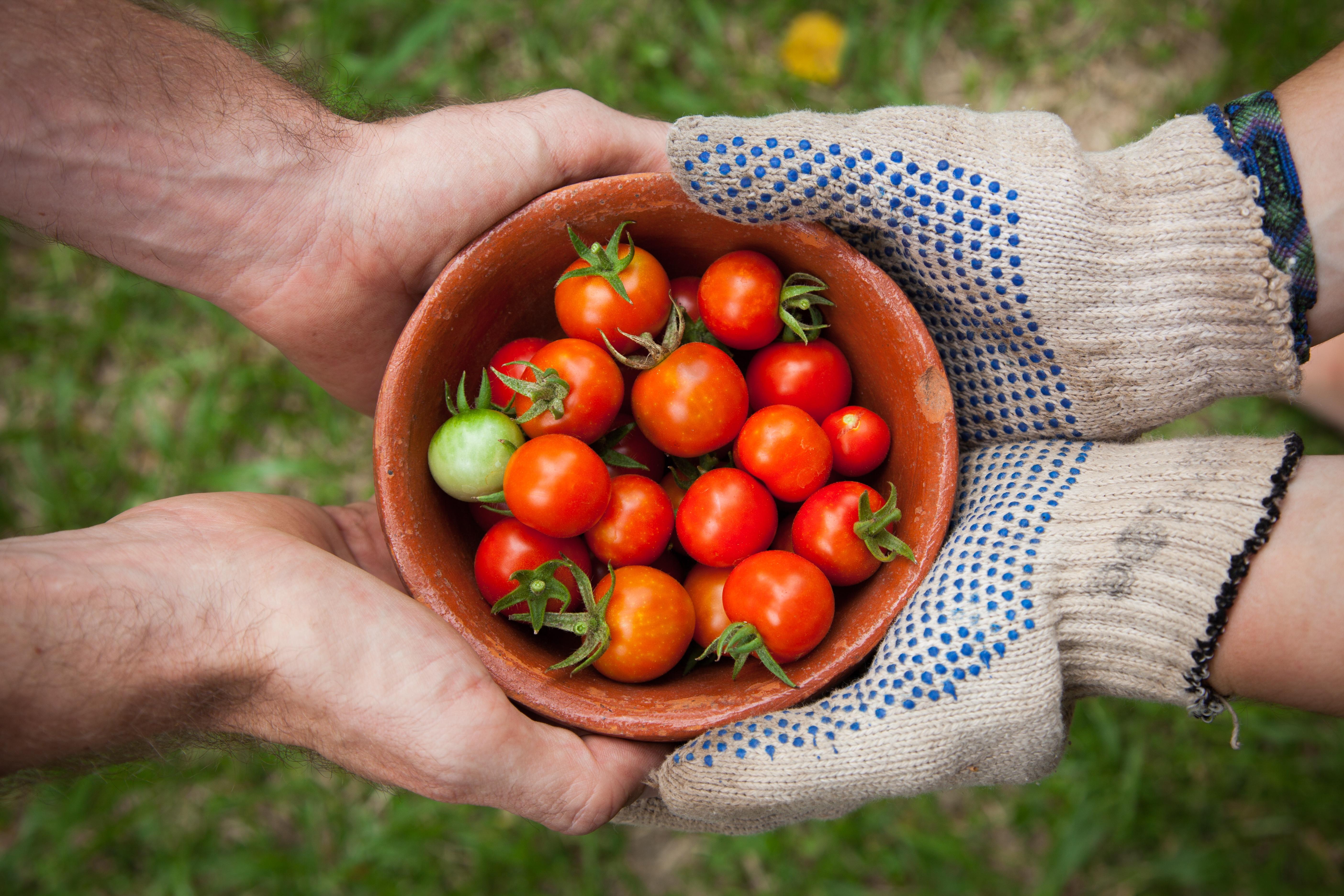Frutas ecológicas casa