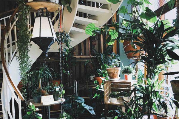 Flores decoración loft