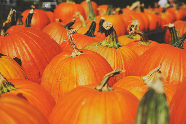 calabazas decoración halloween
