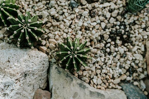 jardín invierno cactus
