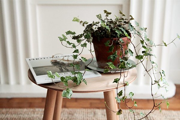 small living plantas