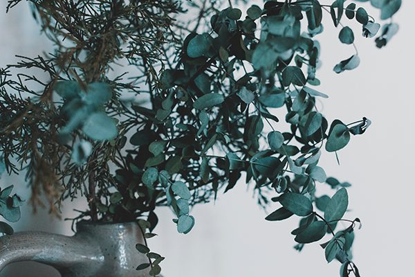 eucalipto organizar primavera