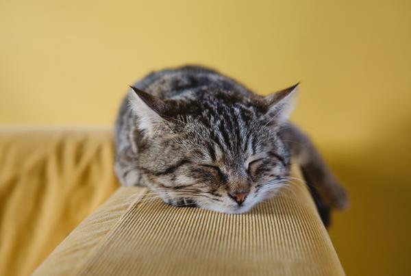 Quitar los pelos del sofá