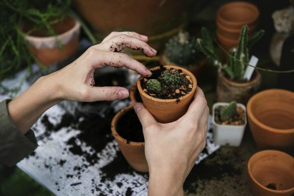 preparar la terraza cactus