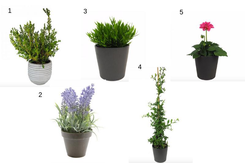 Plantas para el verano exterior