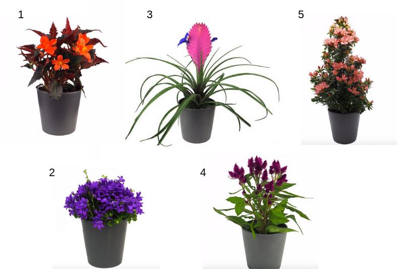 Plantas para el verano interior